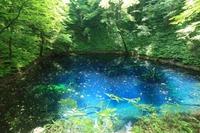 白神山地の青池(十二湖)!青森・秋田の世界自然遺産のアクセスなどを紹介