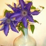 季節の花3