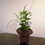 季節の花4