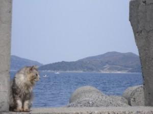 祝島から臨む上関原発予定地・田ノ浦(対岸の山を拓いた区域等)