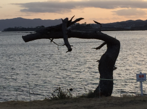 冠水した松原に残された枯木。海を背景に龍の姿に見えます。