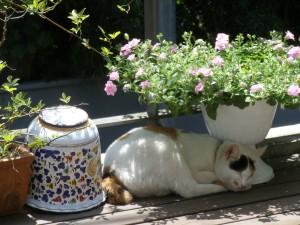 花の下のもんちゃん