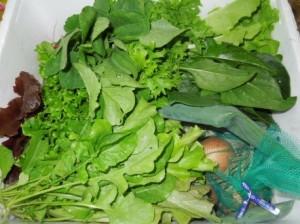 寺町野菜1