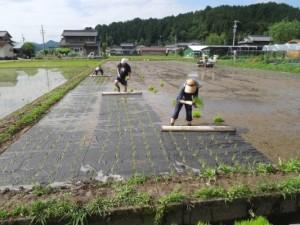 寺町野菜7