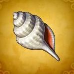 白い貝がら