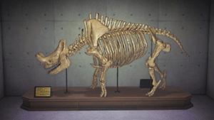 メガセロプス