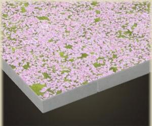 さくらのじゅうたん