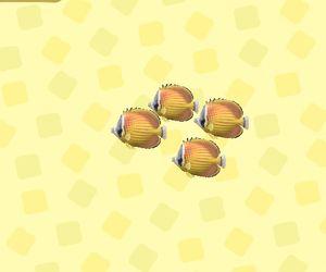 かべかけチョウチョウオ