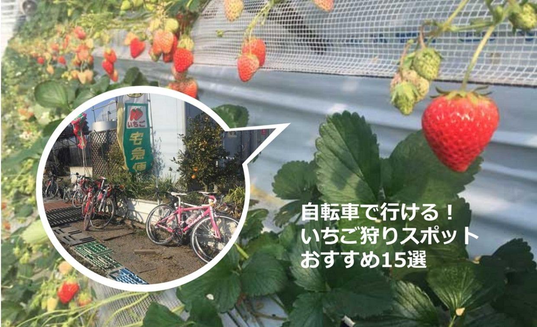 いちご狩り 自転車 おすすめ農園
