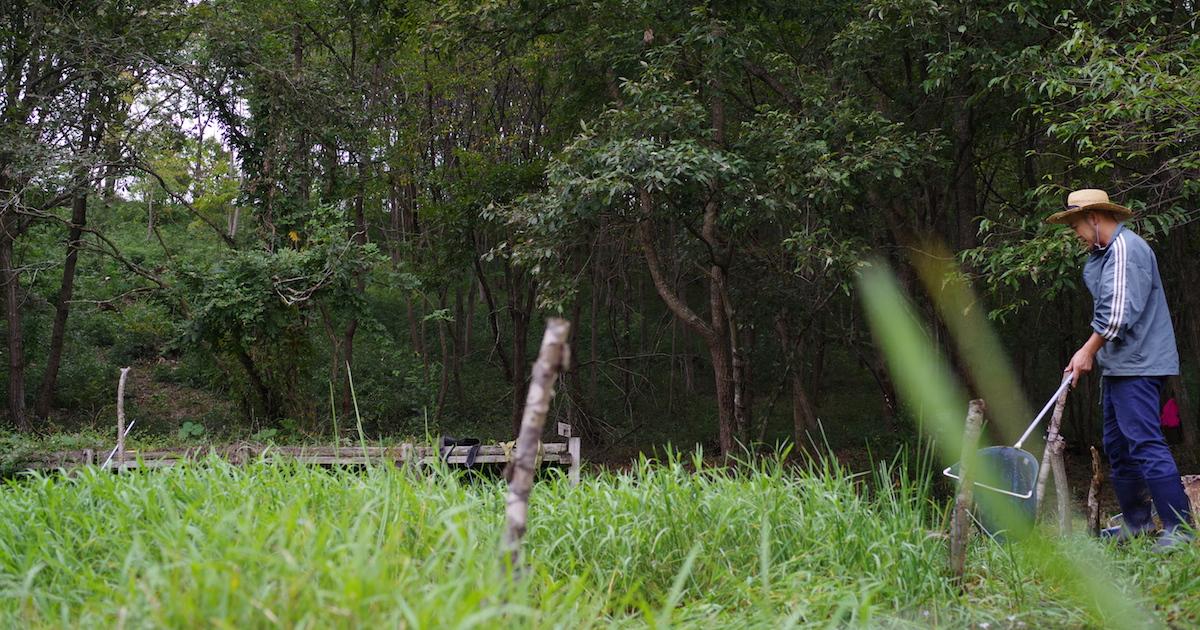 絵本と自然が出会う場所「えほんの丘」の『とんぼいけ観察会』24
