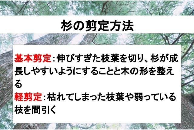杉の剪定方法