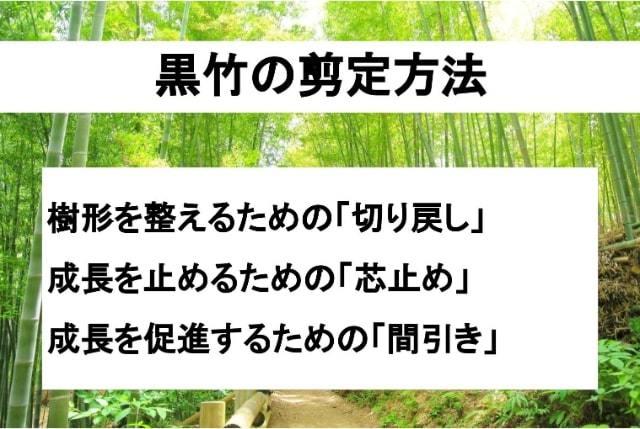 黒竹の剪定方法