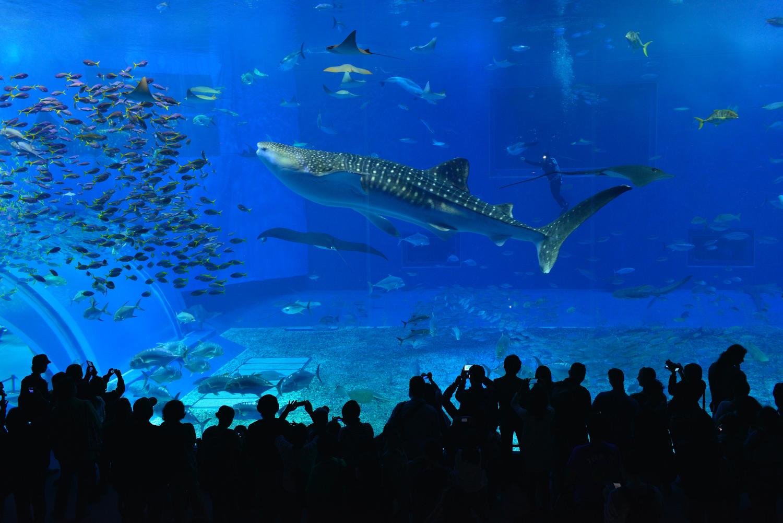 沖縄美ら海水族館水槽前2