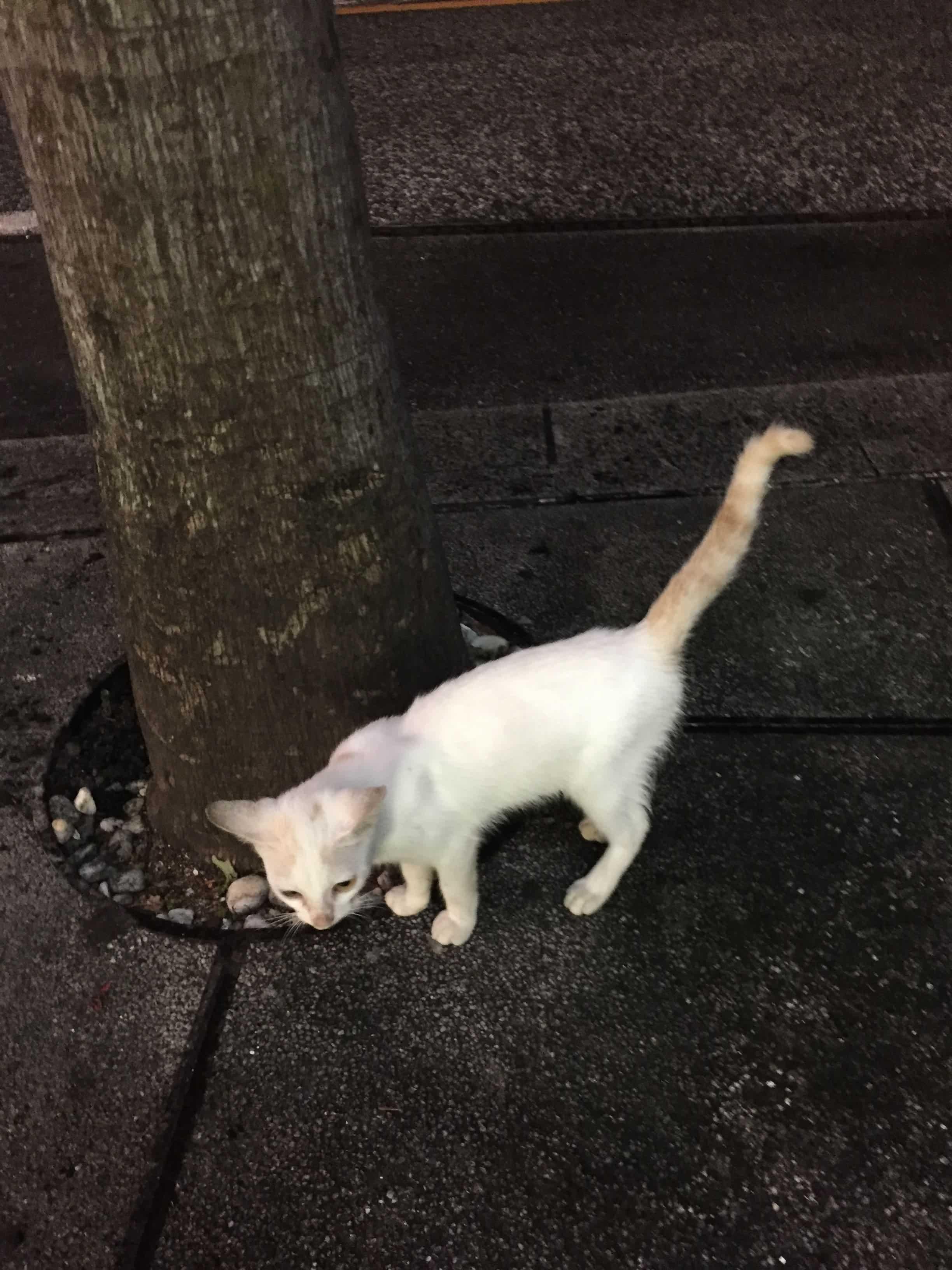 沖繩的貓咪 的封面圖片