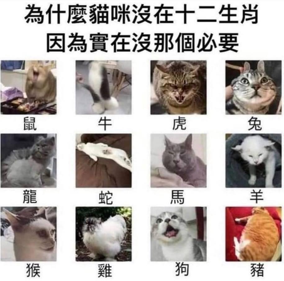 十二生肖為什麼沒有貓咪 的封面圖片