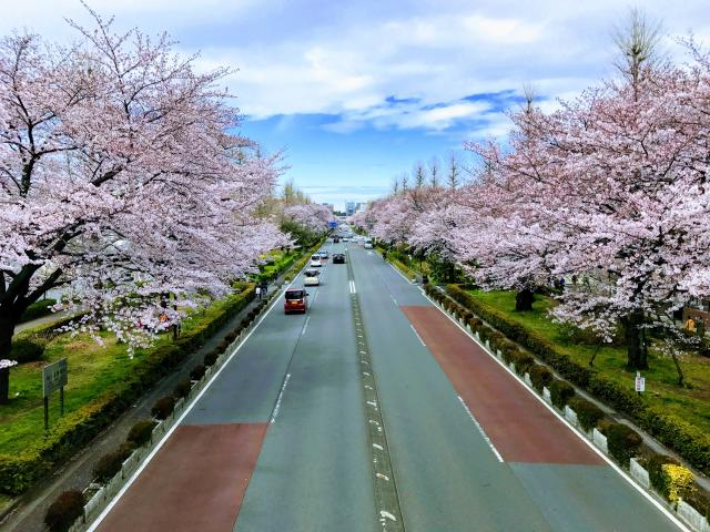 画像: 橋本友樹税理士事務所(東京都国立市中1-18-16 ミンコートグランデ202号)