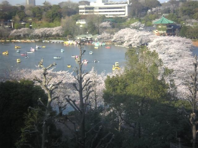 画像: 加門成昭税理士事務所(練馬区)(東京都練馬区栄町26番4号)