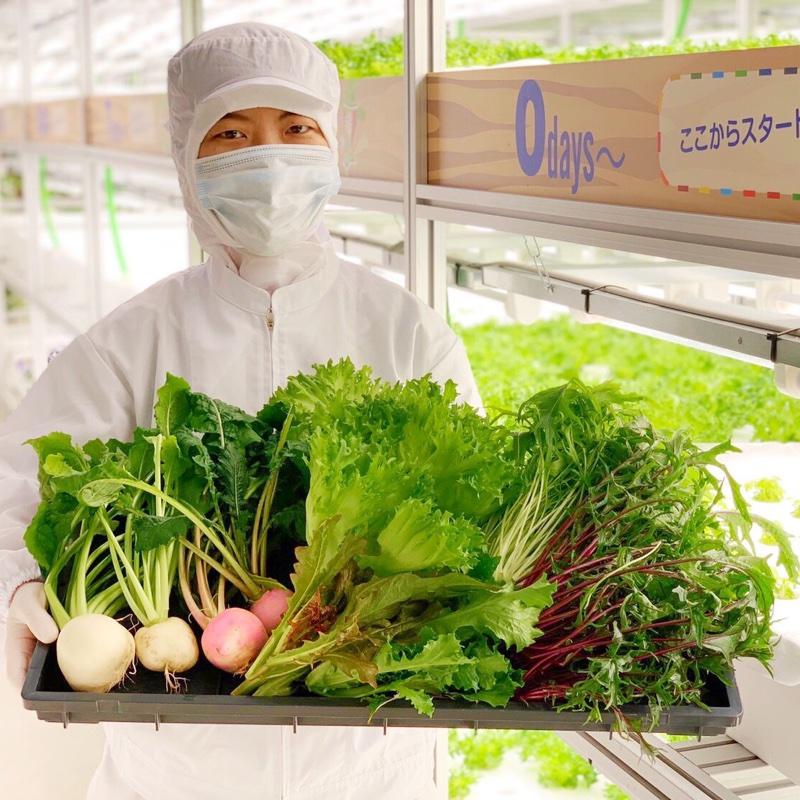 株式会社 大剛 伏見工場 野菜プラント 京都市