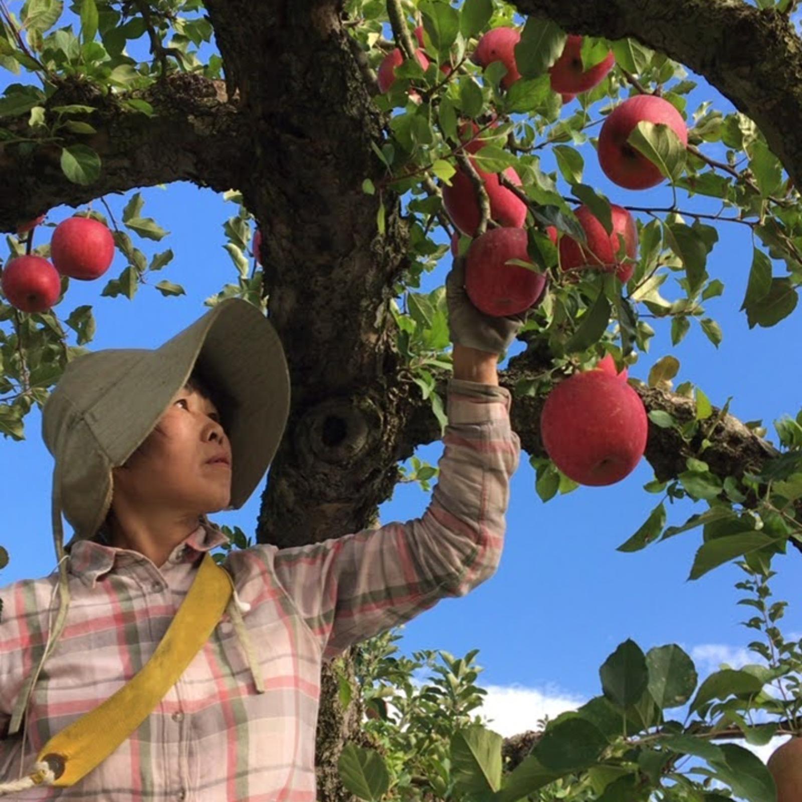 (有)ヤマヨシ青果 南陽市 果物や野菜などの宅配食材通販産地直送アウル