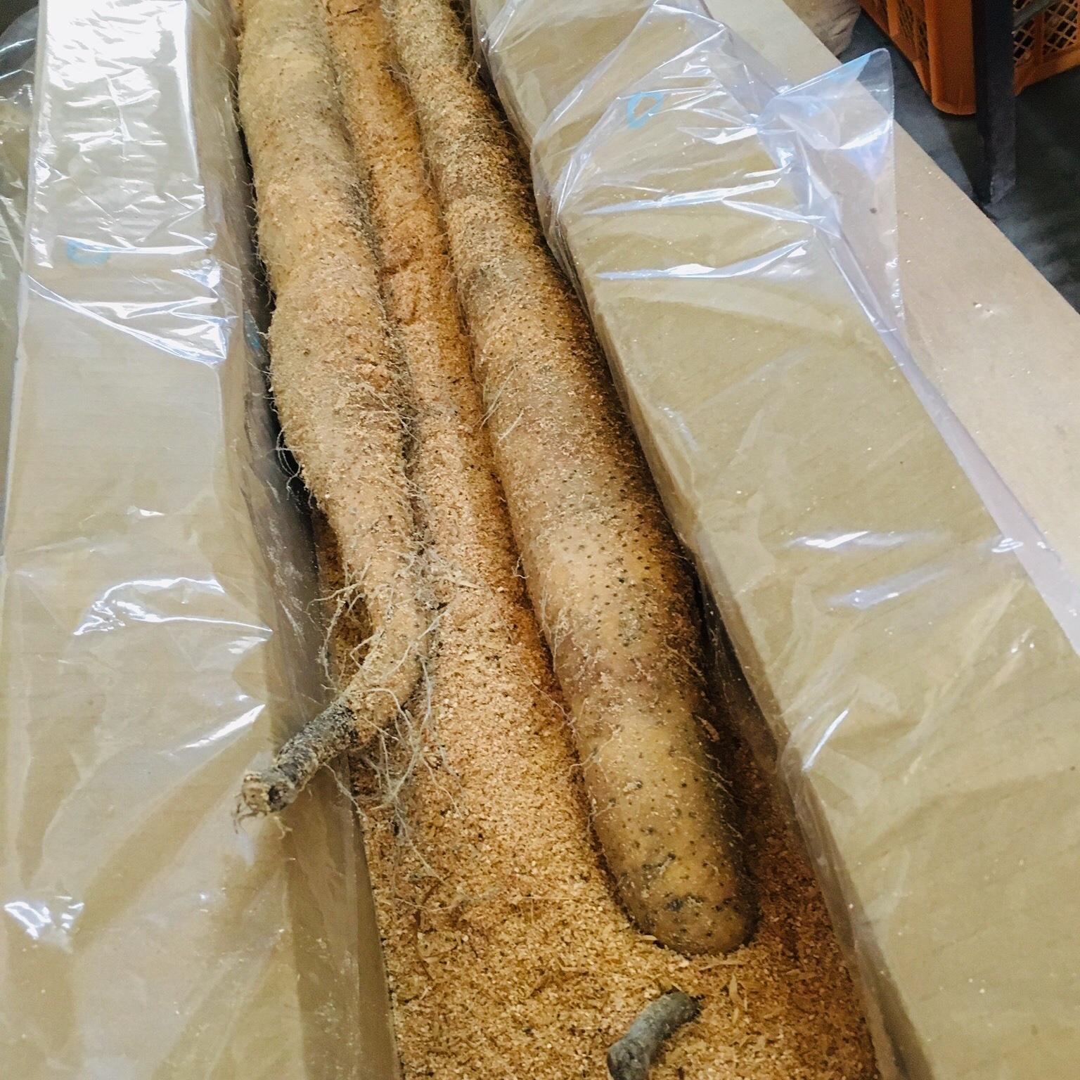 【飲食店様向け】くわはら農園の業務用自然薯(おがくず入り) 5kg 野菜/山菜通販