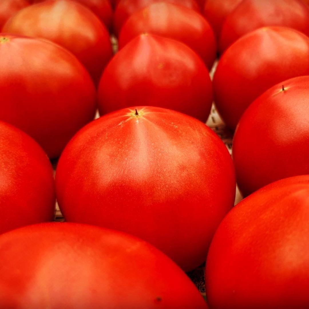 完熟桃太郎とまと(A品) 2.0kg 野菜/トマト通販