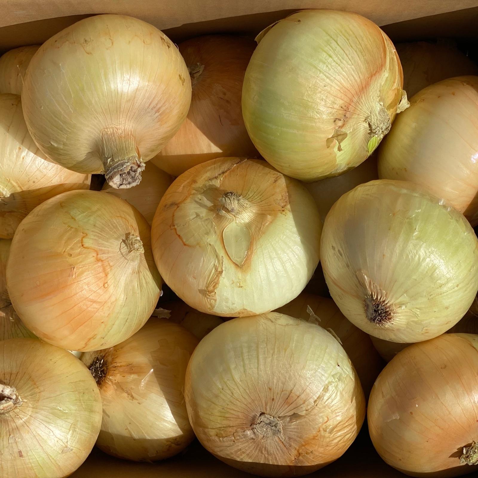 訳あり玉ねぎ Sサイズ 10kg 野菜/玉ねぎ通販