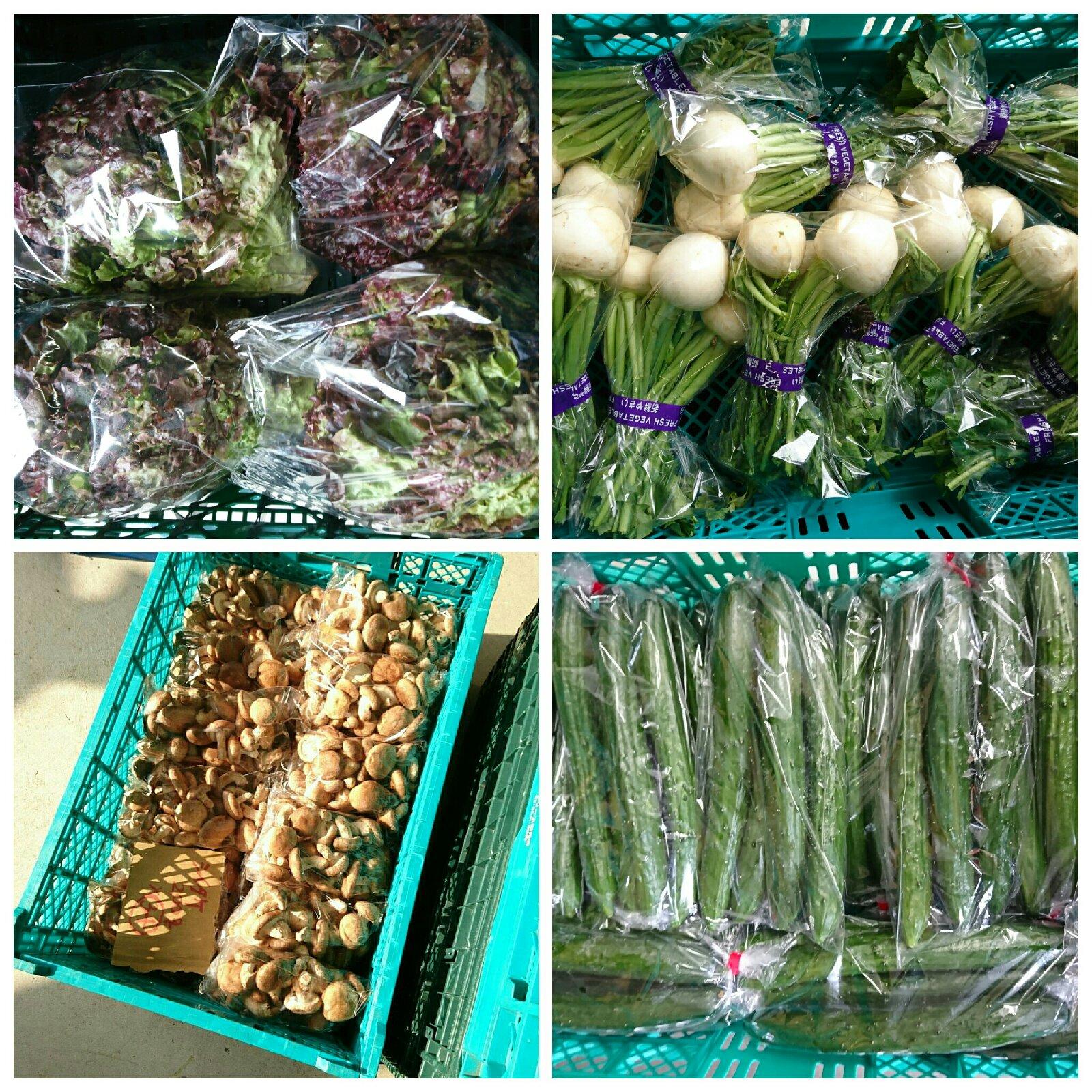 カブセット 野菜/セット・詰め合わせ通販