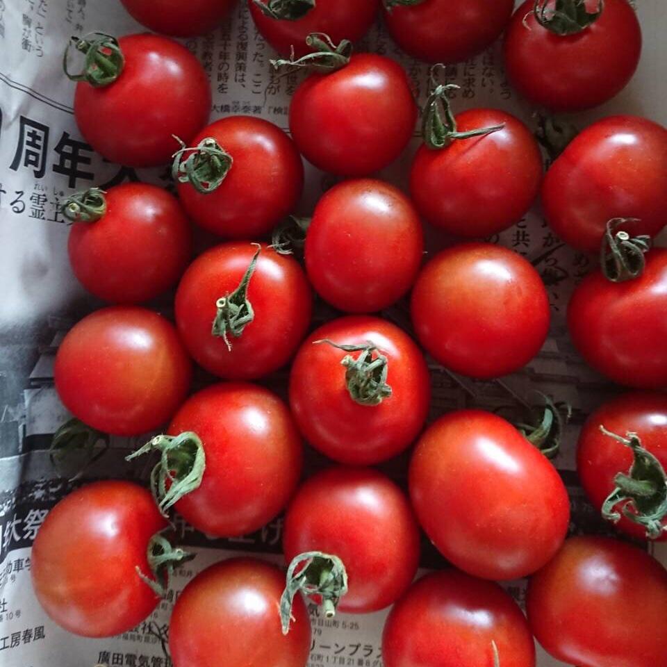 【限定数】フルティカトマト500g 500g 野菜/トマト通販