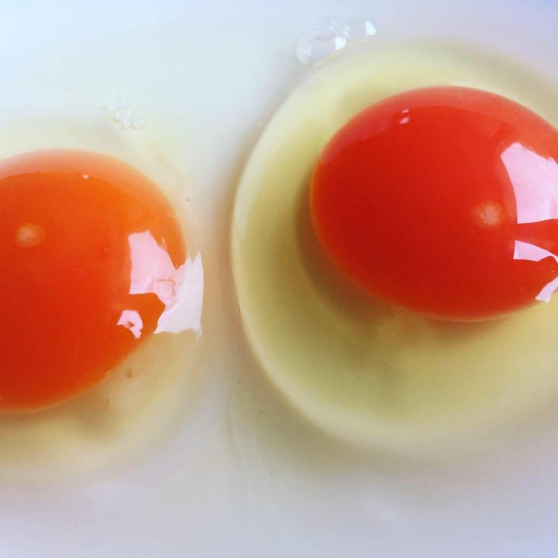【酵母・平飼い卵50個】酵母を与えて育った平飼いたまご(元気たまご)50個