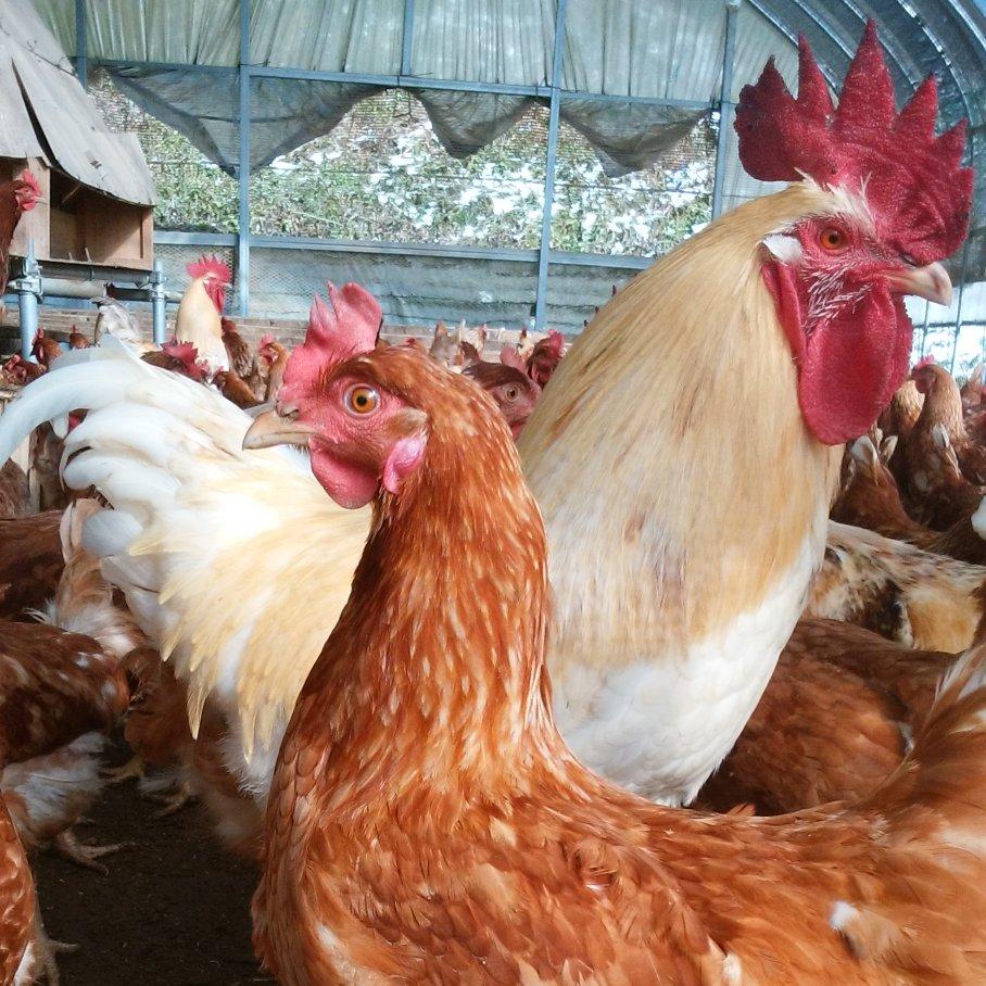 平飼い有精卵「ほんまの卵」 お試し20個 10個入り2パック(1パック600g以上) 卵/鶏卵通販