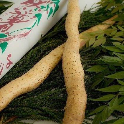 くわはら農園の立派な一本物自然薯 レシピ付 1.3kg前後(1〜2本) 野菜/山菜通販