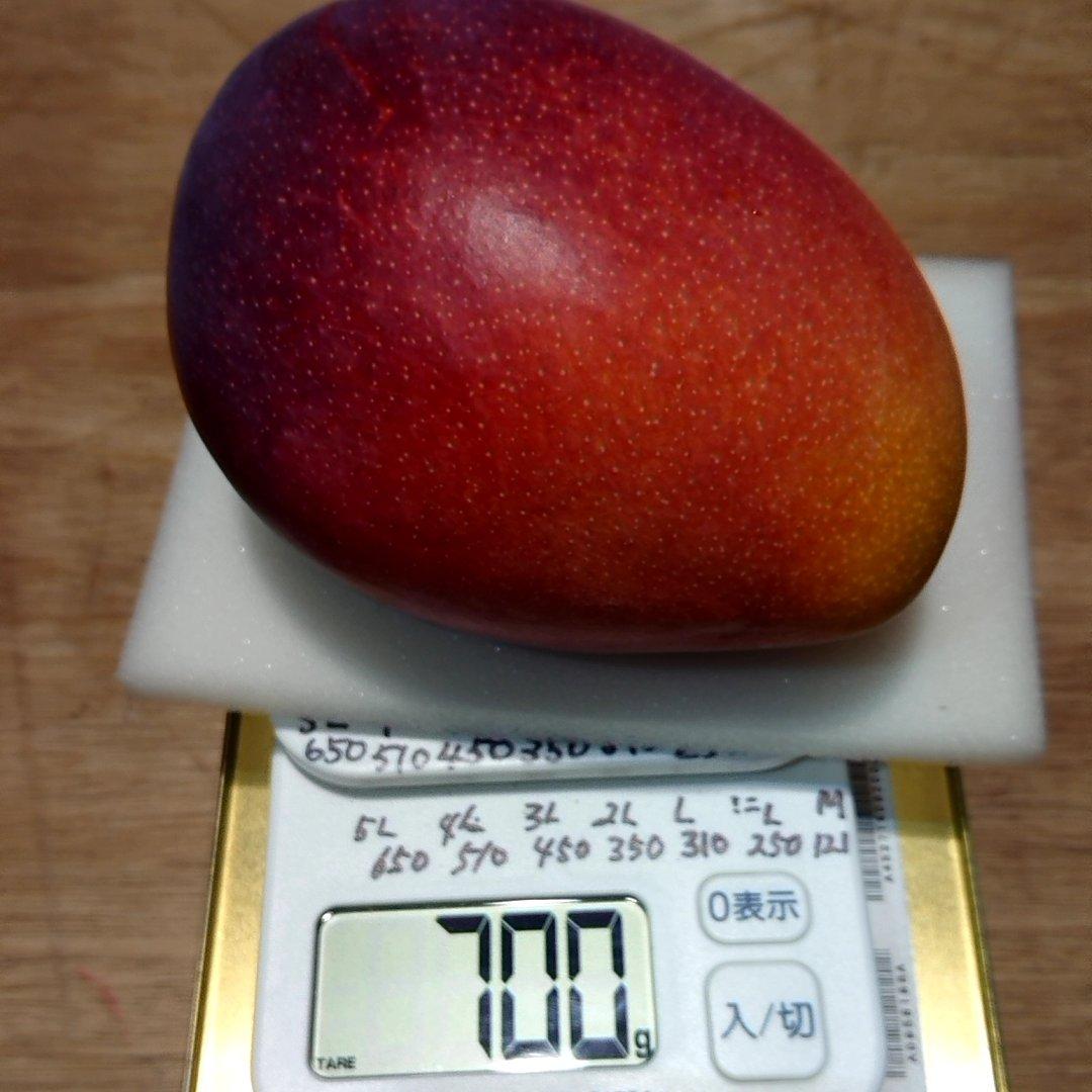 完熟マンゴー 5Lサイズ  650g以上 果物/マンゴー通販