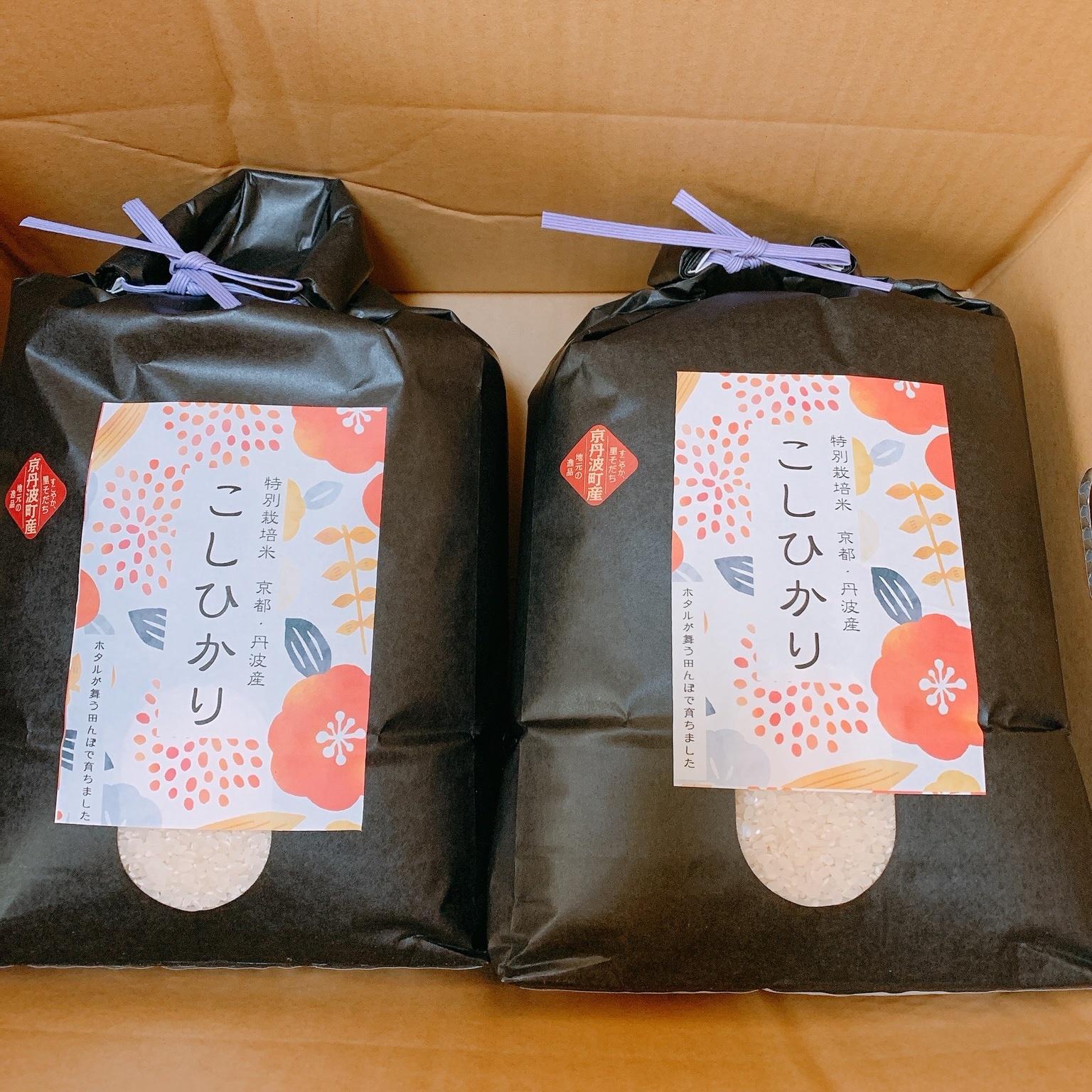 令和元年産  京都丹波産コシヒカリ10kg 10kg 米/米通販