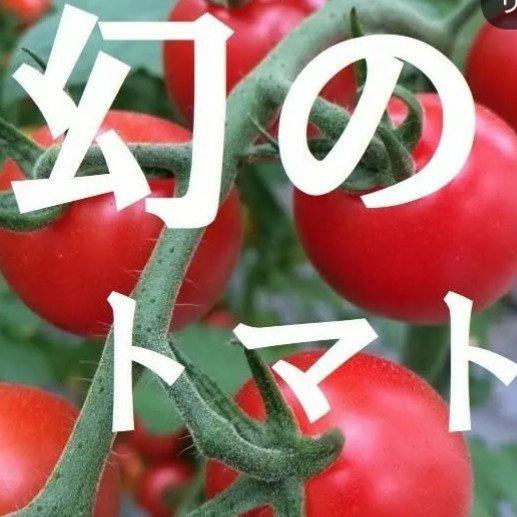 【幻のトマト】miuトマトの飯田農園 キーワード: 飯田農園 通販