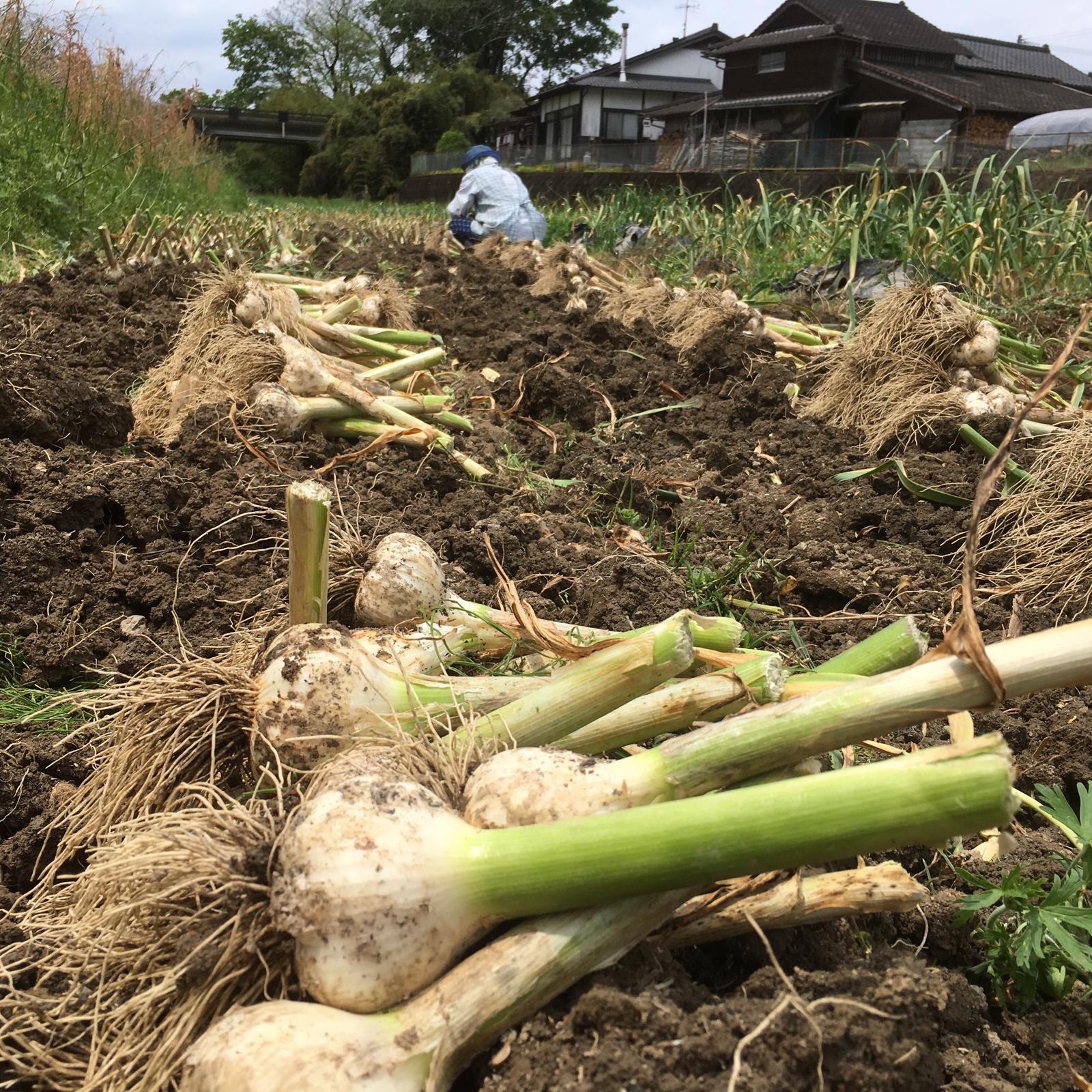 くわはら農園の熊本県産熟成黒にんにく M玉3個入(100g) x 3袋 野菜/野菜の加工品通販