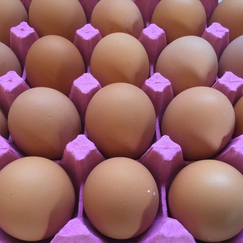 【酵母・平飼い卵20個】酵母を与えて育った平飼いたまご(元気たまご)20個