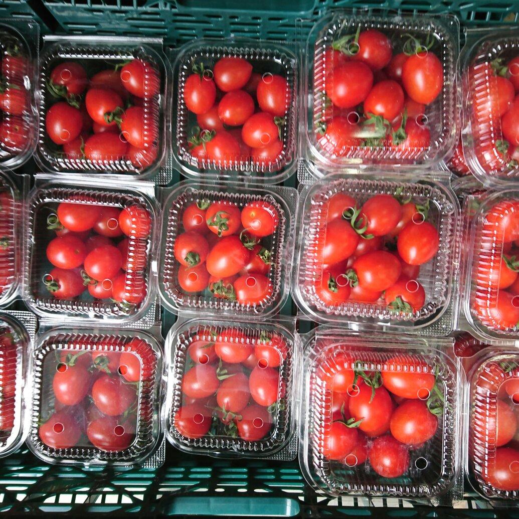ミニトマト5パック 野菜/トマト通販