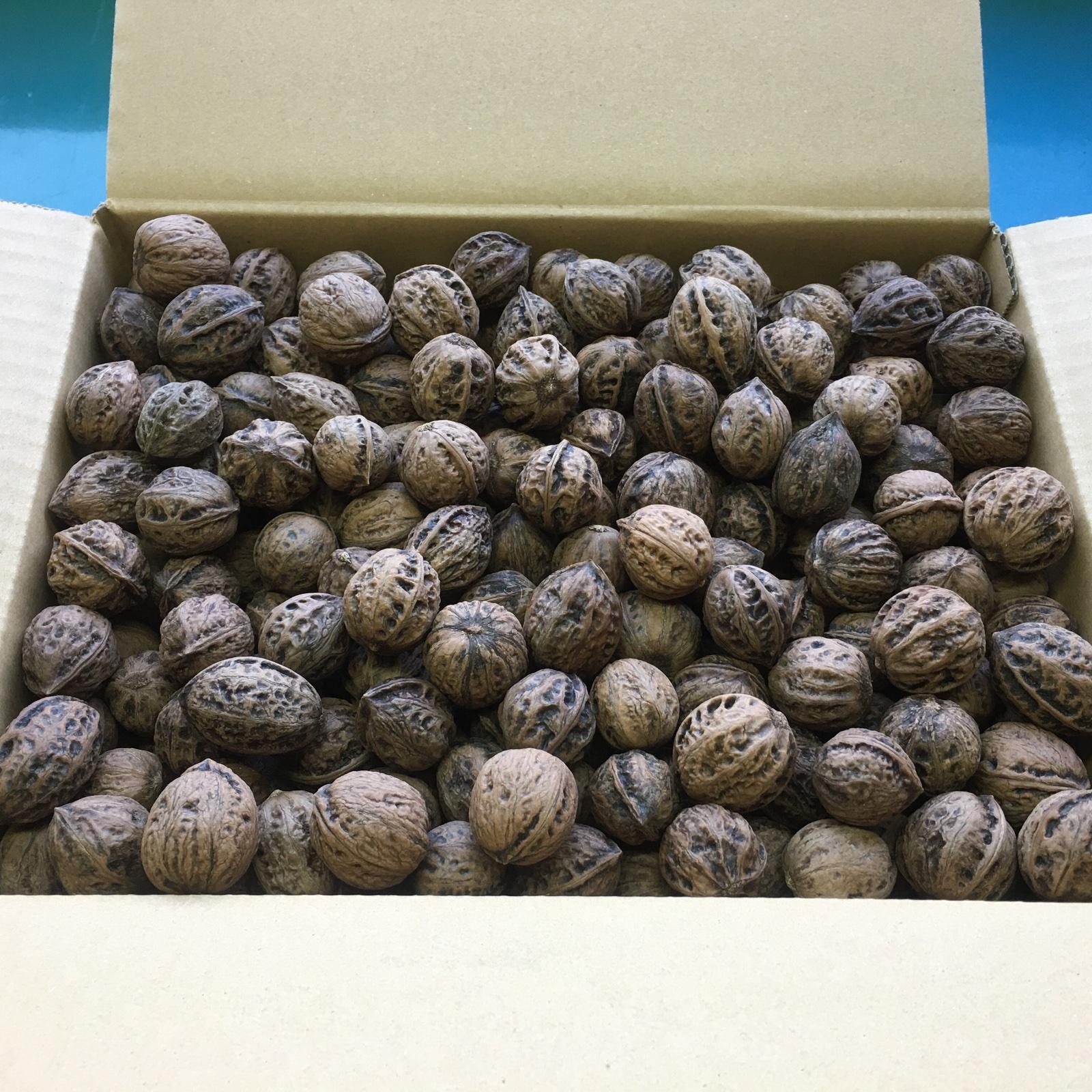 雪鬼胡桃 4kg 果物/その他果物通販