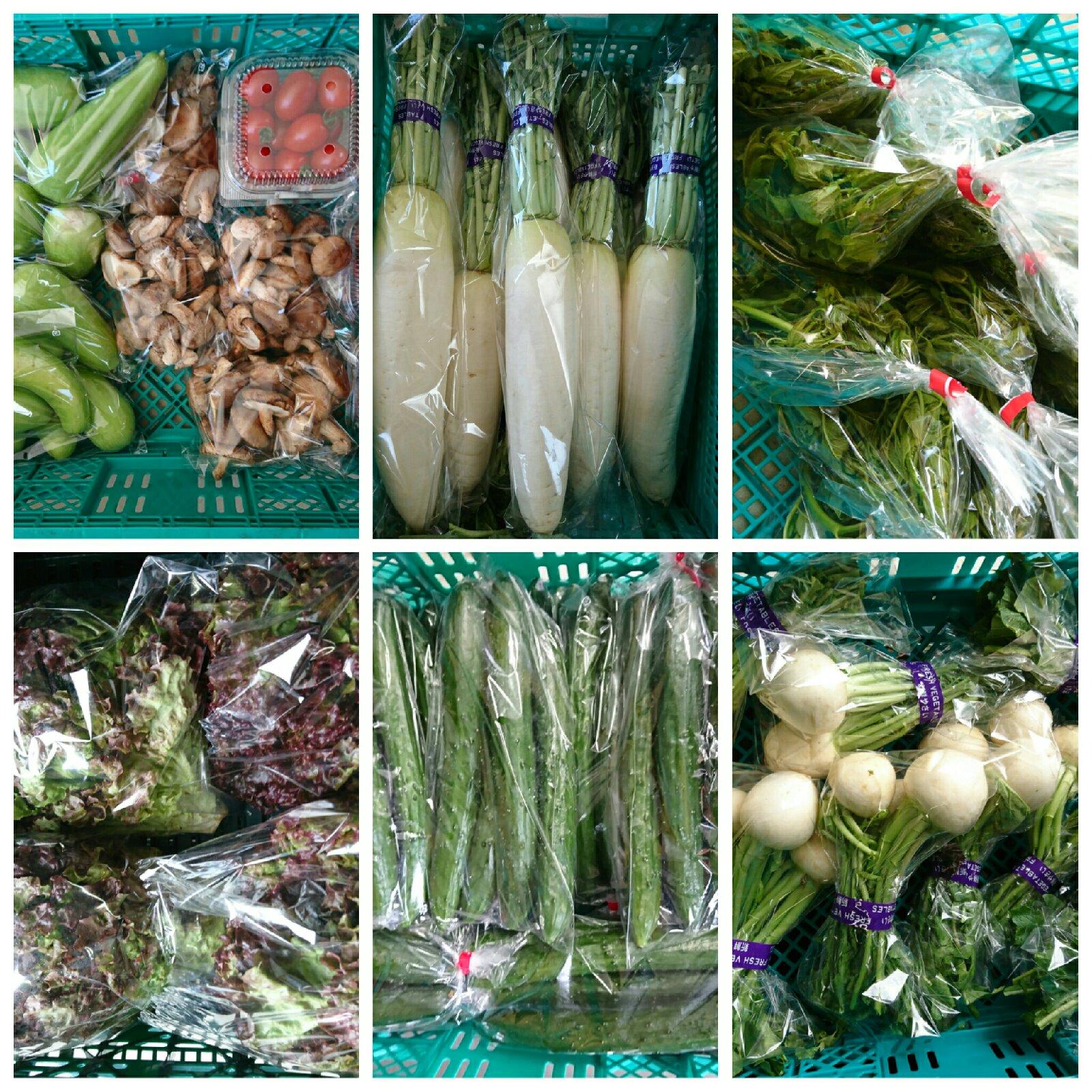 タラの芽100g大根1胡瓜4本椎茸200gミニトマト200gサニー2カブ6白瓜500g 野菜/セット・詰め合わせ通販