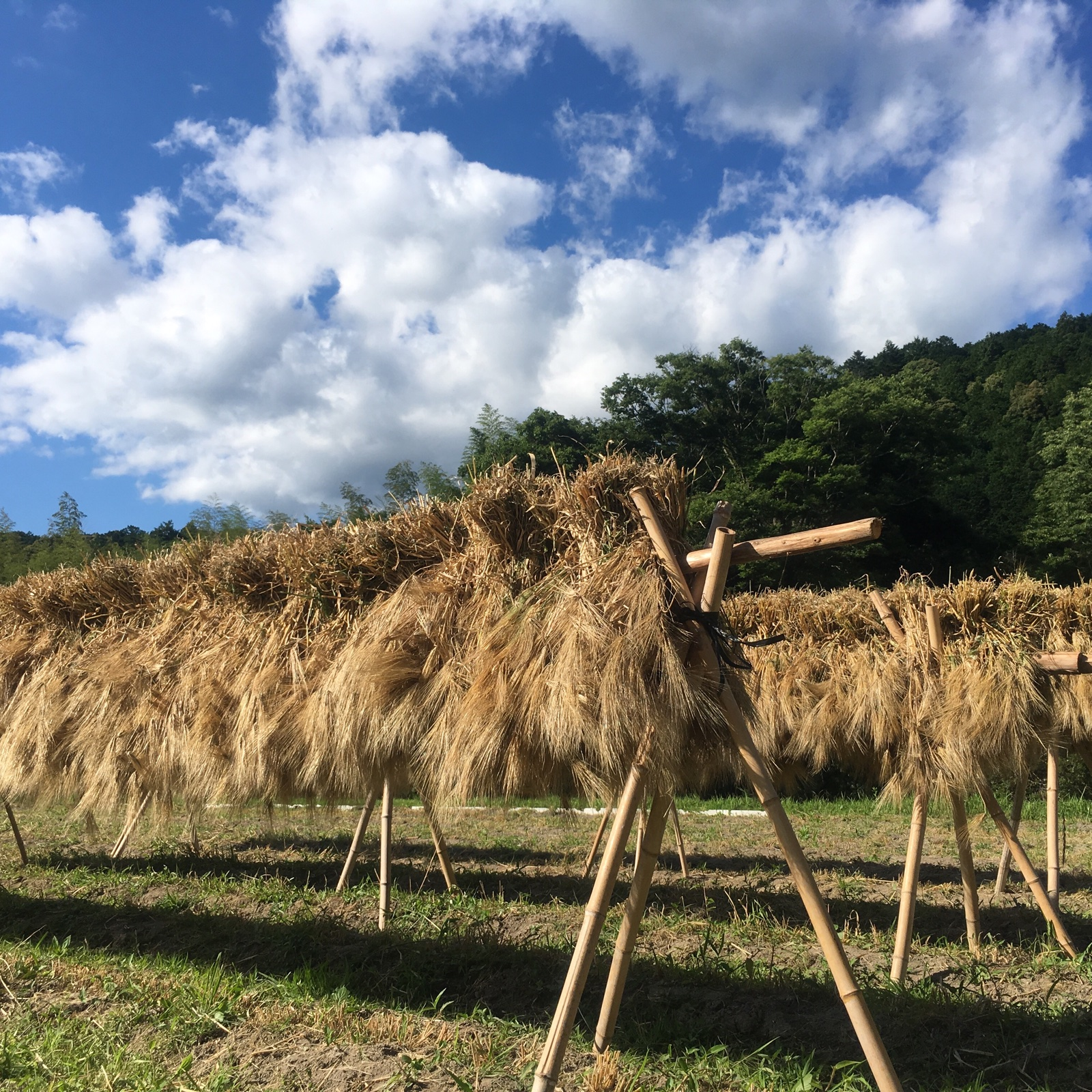 【三重県 熊野産】自然栽培 六条麦茶(300g×2個) 300g ×2 お茶/その他のお茶通販