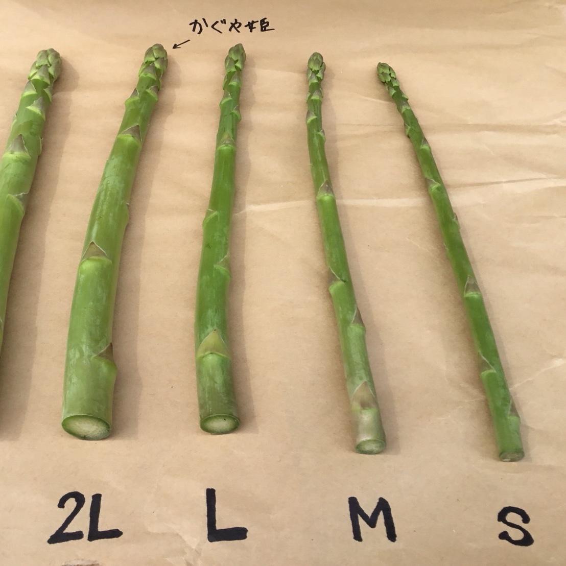 「あすぱらかぐや姫」よりちょっと細いLサイズアスパラ。 1kg 野菜/アスパラガス通販