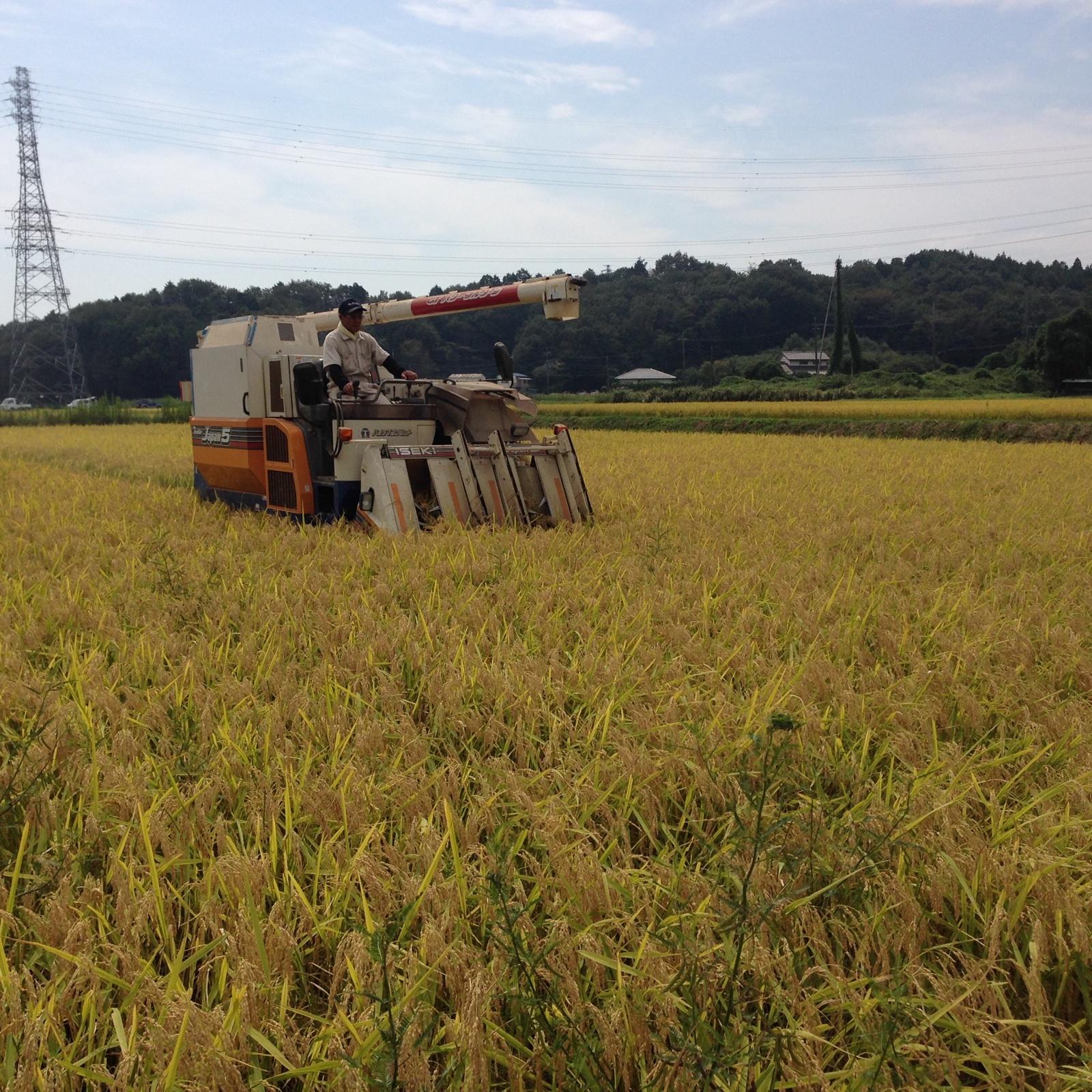 樫村ふぁーむのコシヒカリ玄米5kg 5kg 米/玄米通販