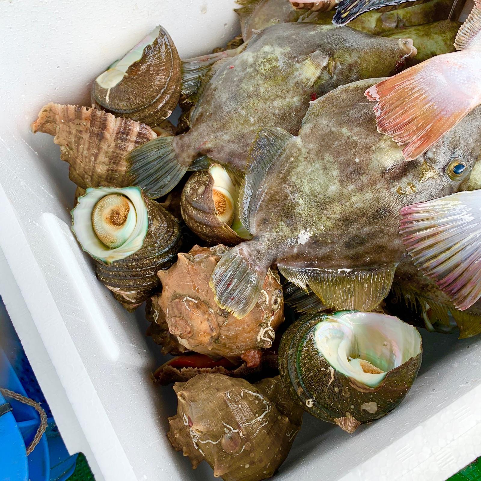 ✨瀬戸内 鮮魚 詰め合わせ 3キロ✨ 3キロ 魚介類/セット・詰め合わせ通販