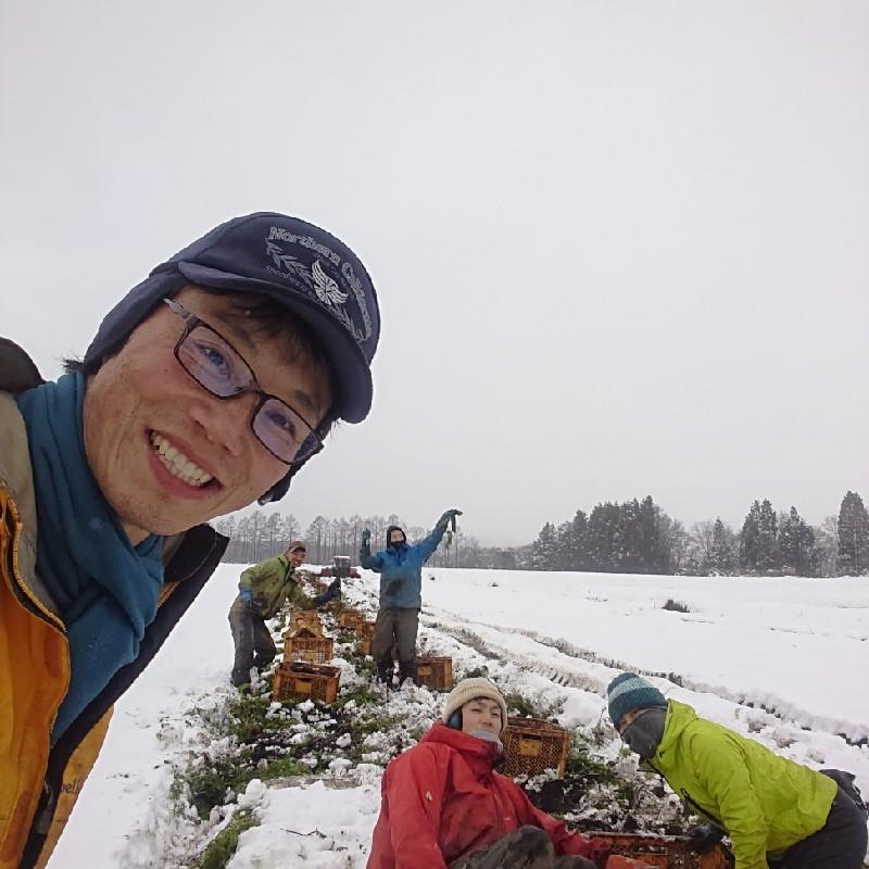 馬場農園の雪下人参「灯かり」 5kg 野菜/人参通販