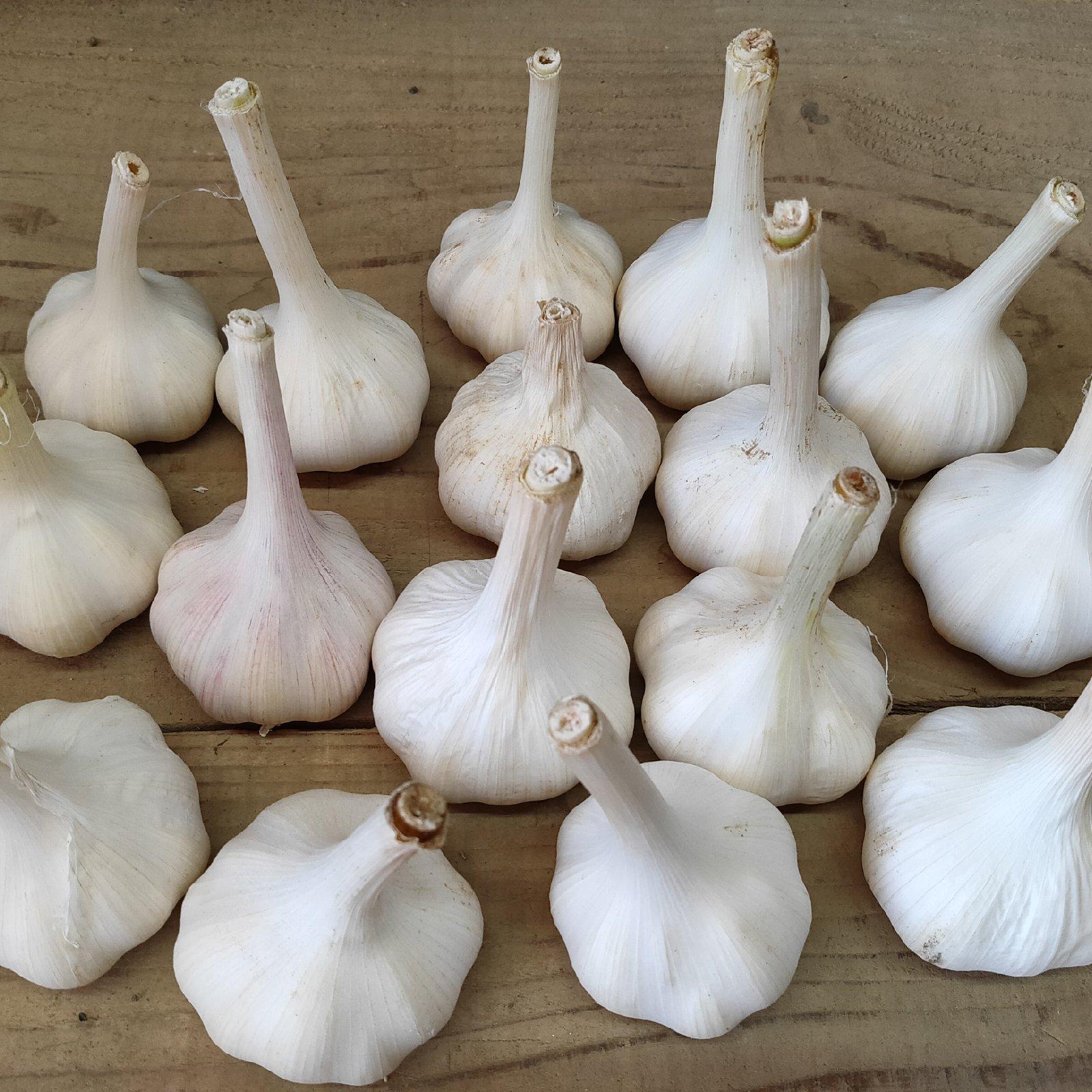 お試し★無農薬で育てたにんにく5個 にんにく5個 野菜/その他野菜通販