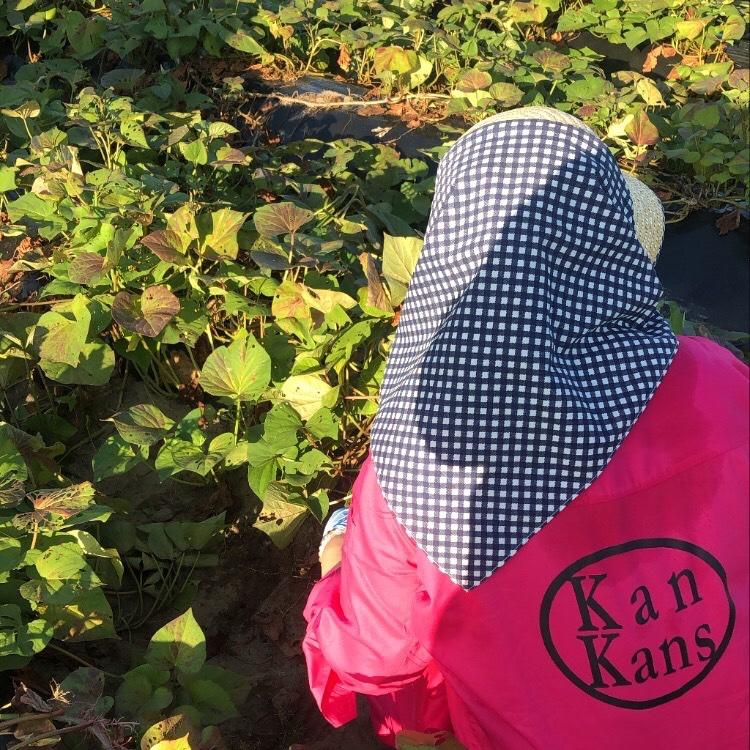 kankans 浜松市 果物や野菜などの宅配食材通販産地直送アウル