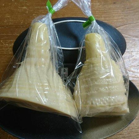 大釜湯がきたけのこ 1kg 1kg 野菜/野菜の加工品通販