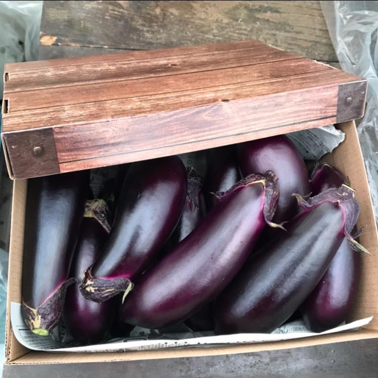 訳あり お多福野菜千両茄子 約1.5k〜 12本〜15本 野菜/茄子通販