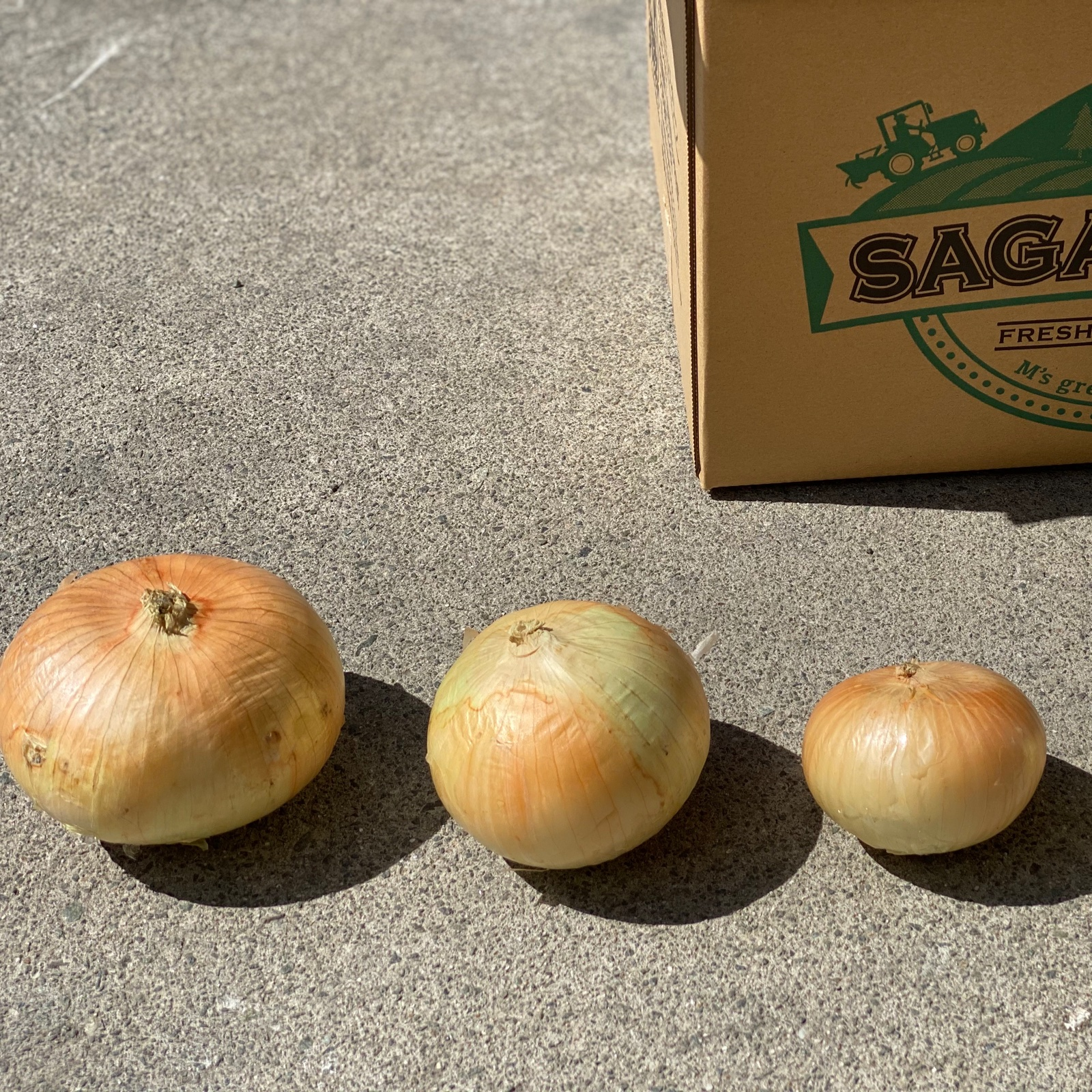 訳あり玉ねぎ Lサイズ 10kg 野菜/玉ねぎ通販