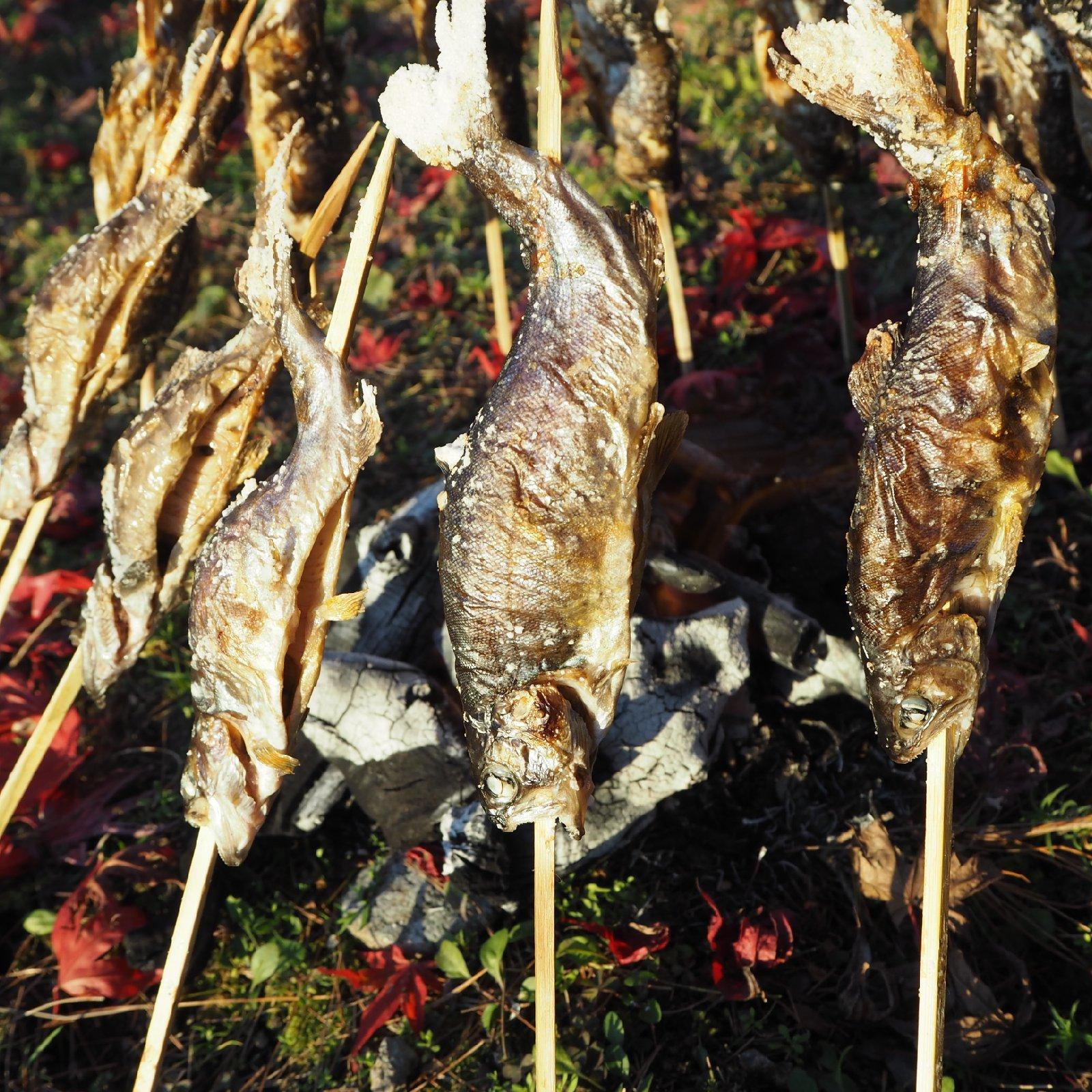 [虹鱒 ]ニジマス 12尾入 (19cmサイズ)冷凍 12尾 魚介類/川魚通販